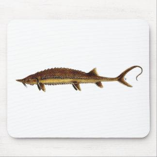 Shovelnose Sturgeon - Scaphirhynchus platorynchus Mouse Pad