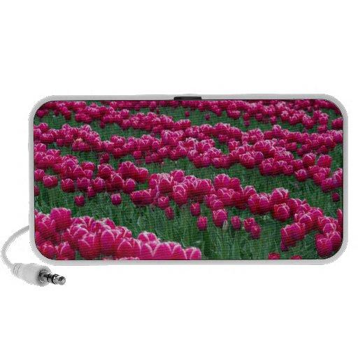 Show garden of spring-flowering tulip bulbs in mini speaker