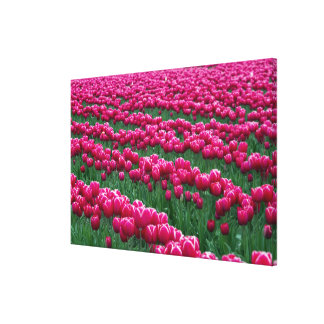 Show garden of spring-flowering tulip bulbs in stretched canvas print
