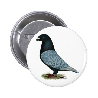 Show Racer Andalusian Pinback Button