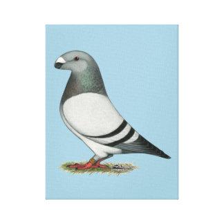 Show Racer Blue Bar Pigeon Canvas Prints