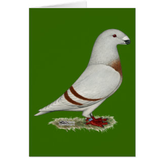 Show Racer Red Bar Pigeon Note Card