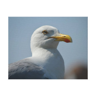 `Show Seagull` Gallery Wrap Canvas