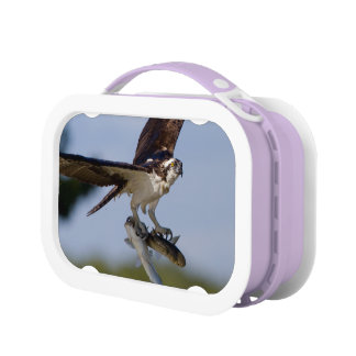 Showing Off Lunch Box