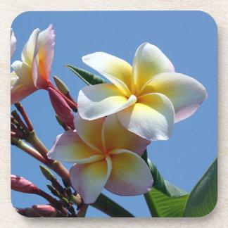 Showy Plumeria Frangipani Blooms Coaster