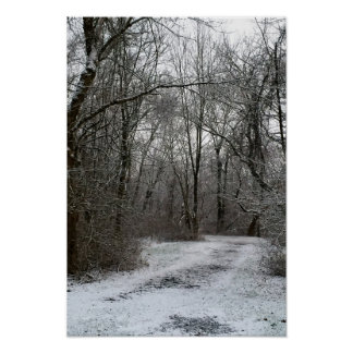 Showy Tree Lined Path Poster