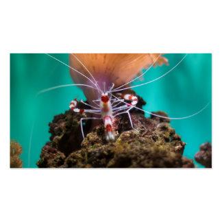 Shrimp Climbing An Anemone Pack Of Standard Business Cards