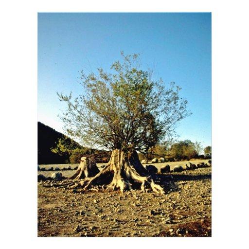 Shrub Growing From Tree Stump Flyer