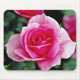 Shrub Rose 'Country Dance 'flowers Mouse Pad