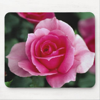 Shrub Rose Country Dance Roses Mousepads