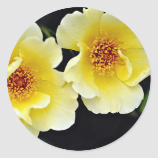 Shrub Rose Golden Wings Yellow flowers Round Stickers