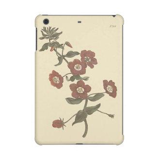 Shrubby Pimpernel Botanical Illustration