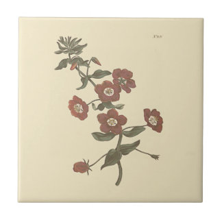 Shrubby Pimpernel Botanical Illustration Tile