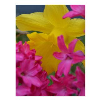 shy daffodil postcard