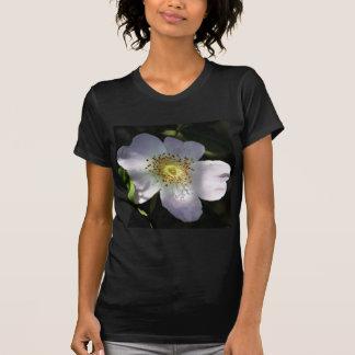 Shy Dog Rose Dappled in Sunlight T-Shirt