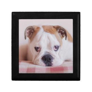 Shy English Bulldog Puppy Gift Box