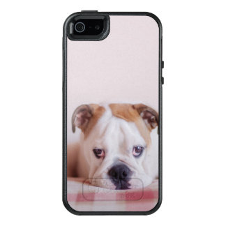 Shy English Bulldog Puppy OtterBox iPhone 5/5s/SE Case