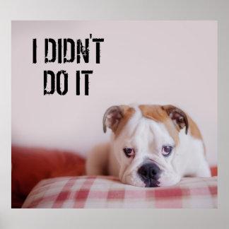 Shy English Bulldog Puppy Poster