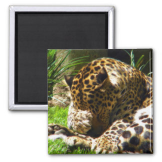 Shy Leopard Square Magnet