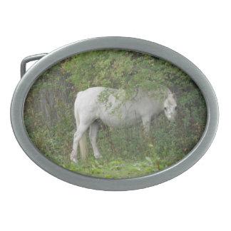 Shy White Horse Belt Buckle