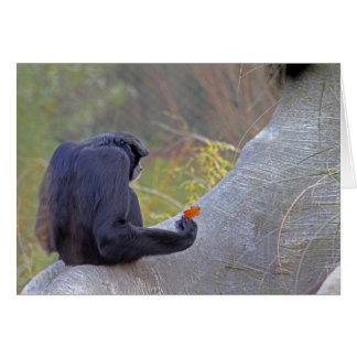 Siamang gibbon card