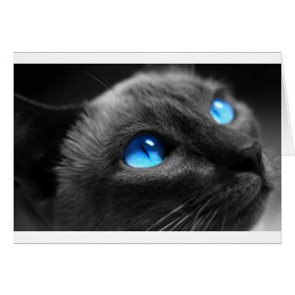 Siamese Blue Eyes Card