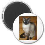 Siamese Cat 6 Cm Round Magnet