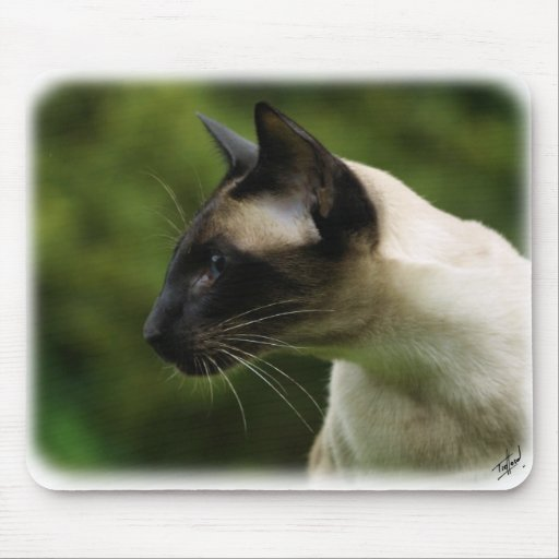 Siamese Cat 9W027D-128 Mouse Pads