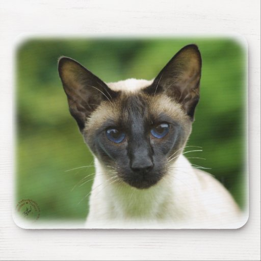 Siamese Cat 9W027D-131 Mouse Pad