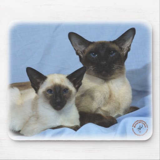 Siamese Cat 9W055D-035 Mouse Pads