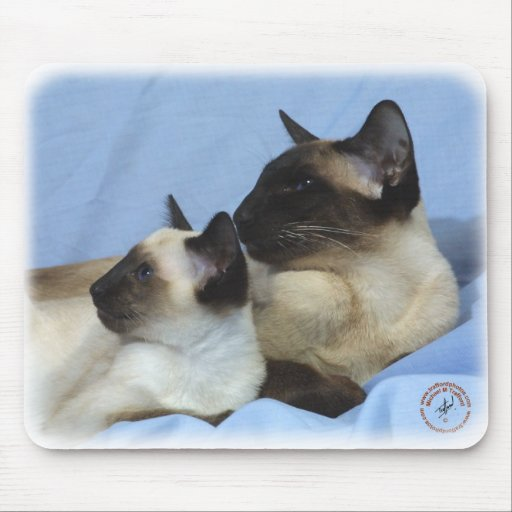 Siamese Cat 9W055D-049 Mouse Pads