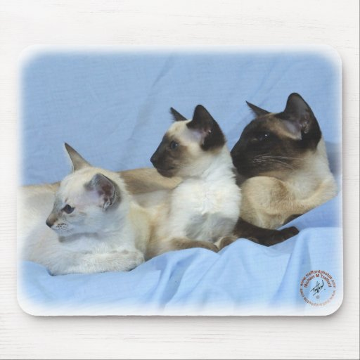 Siamese Cat 9W055D-074 Mouse Pads
