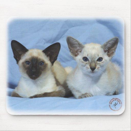 Siamese Cat 9W055D-100 Mousepads
