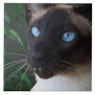 Siamese Cat Blue Eyes Tile
