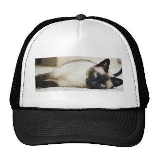 Siamese Cat Mesh Hat