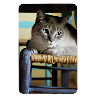 Siamese Cat in Antique Wicker Chair Magnets