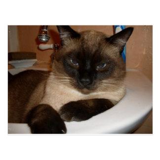 Siamese Cat in Sink  Postcard