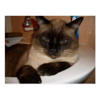 Siamese Cat in Sink Postcard Post Card