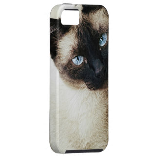 Siamese Cat iPhone 5 Covers