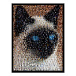 siamese Cat Montage Print