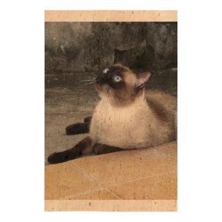 Siamese cat pet purr meow face eyes cute pets queork photo print