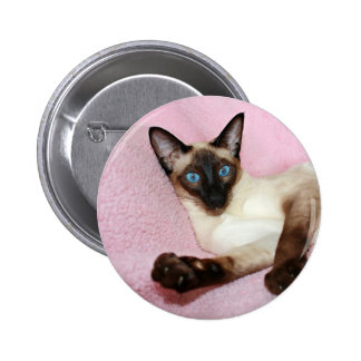Siamese Cat Pink Background 6 Cm Round Badge