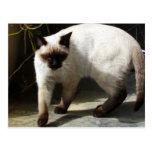 Siamese Cat Postcards