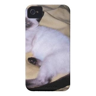Siamese cat sandstone animal art pet cute kitty iPhone 4 cases