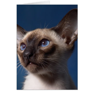 Siamese Cat with Blue Eyes Card
