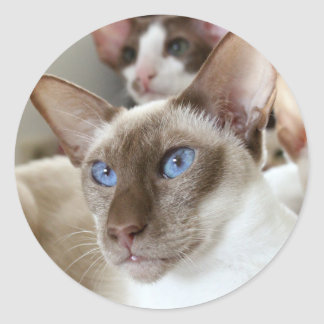 Siamese  Cats Pets Animals Classic Round Sticker