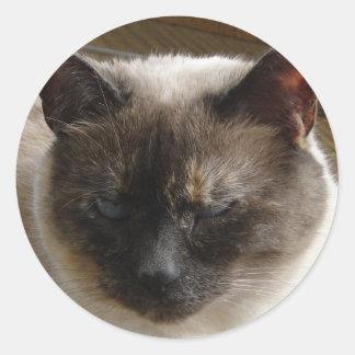 Siamese Classic Round Sticker