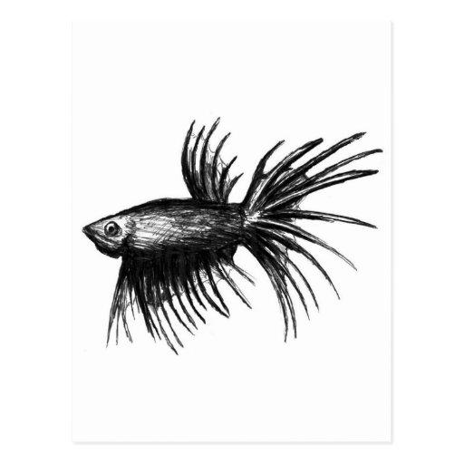 Siamese fighting fish- Betta splendens Postcard