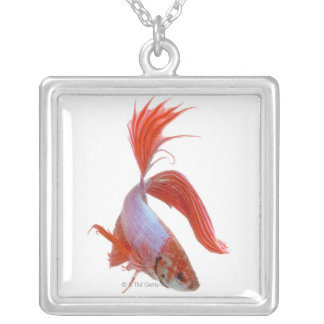 Siamese fighting fish (Betta splendens) Silver Plated Necklace