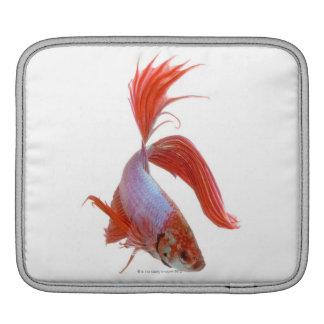 Siamese fighting fish (Betta splendens) Sleeve For iPads